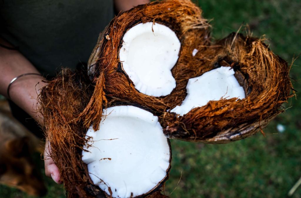 person holding a split coconut